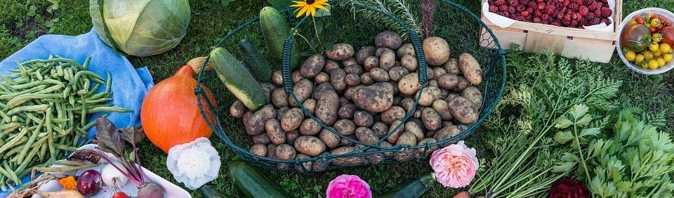 Vegetable produce from a homesteading garden