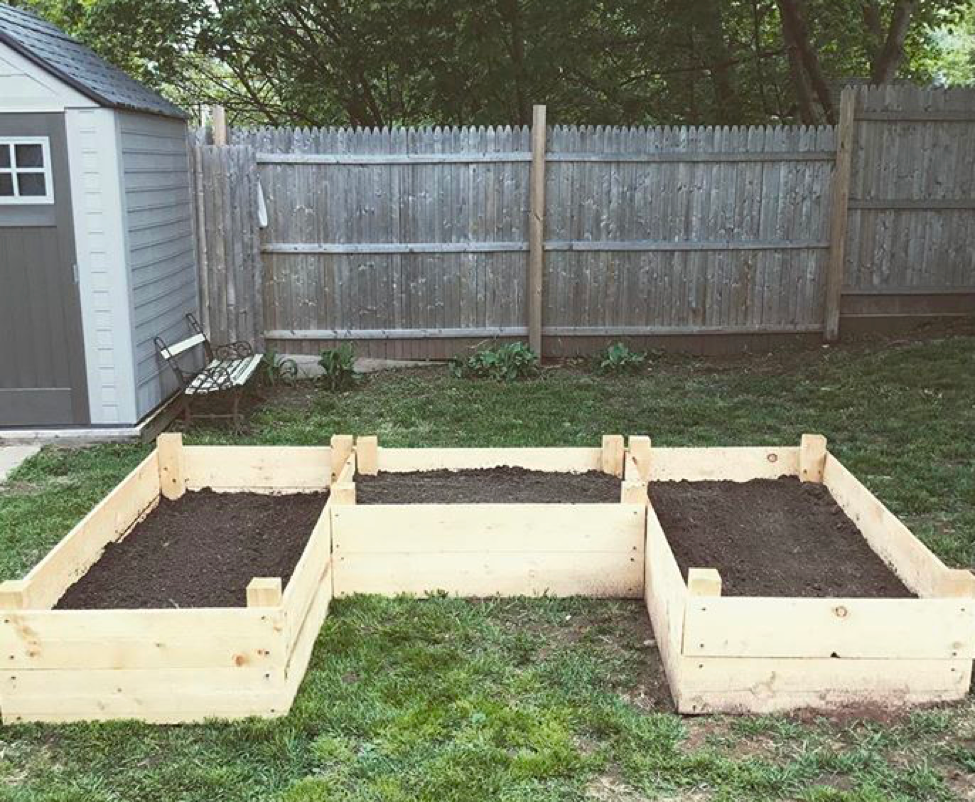starting your own vegetable patch